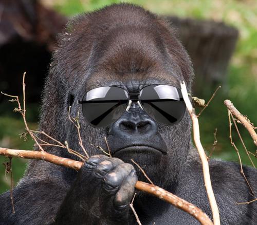 silverback-shades